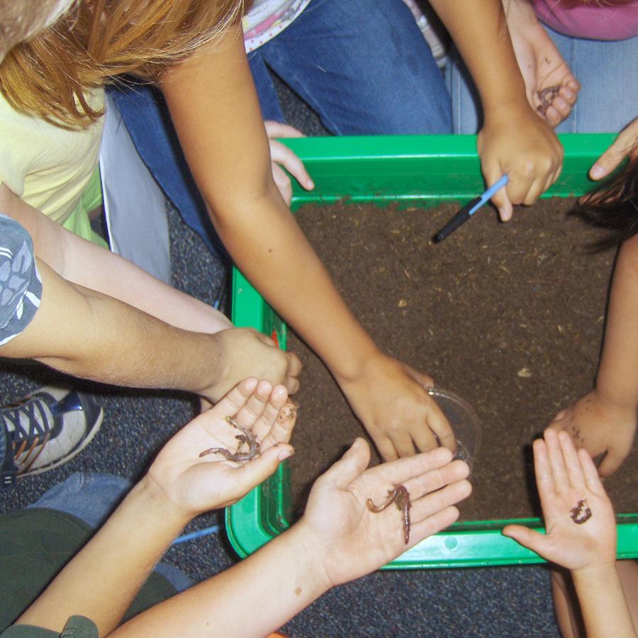 Classroom Composting
