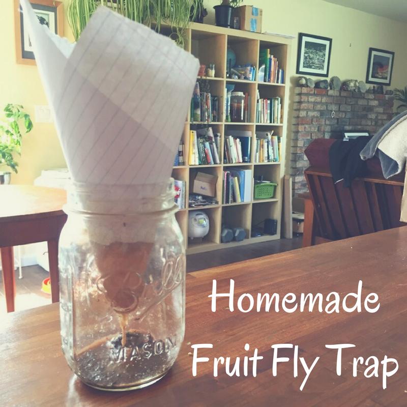 Ball_Homemade Fruit Fly Trap